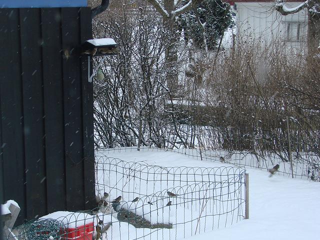 Oversiktsbilde. Her er det lystig fuglekvitter også!